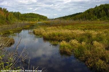 Ruisseau en été (Photo : © Photo : Django Blais)